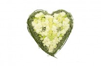 blomst_6-46631_207x136